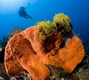 Corals - Franco Banfi