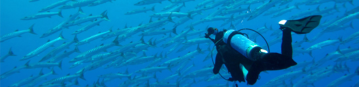 Diver with school of barracuda, Kosrae, Micronesia