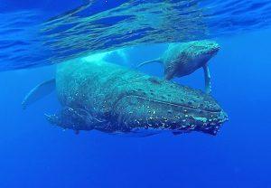 Bucaneer Adventures Niue Dive